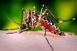 What Blood Type Do Mosquitoes Like Or Hate Learn Why