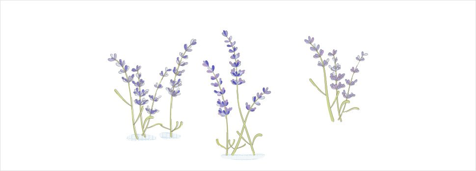 Lavender as a Mosquito Repellent: Does it Work?