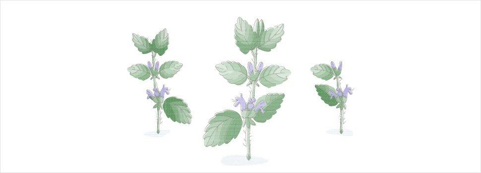 Lemon Balm as a Mosquito Repellent: Does it Work?